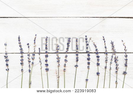 Floral border. Twigs of lavender on a white wooden background