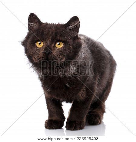 Black Cat. Cat From The Street. Friend. Pet. A True Friend. Kitten. Cute Kitty. Kitty Without Breed