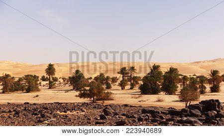 stone and sand desert, with some date palms in western Africa. in the foreground black stone desert, whisch change to sand and in the background to dunes. In the middle a small oasis with date palm trees