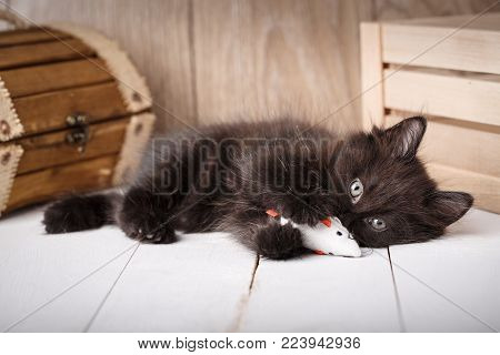 Small Black Kitten Playing Toy On A Wooden Background. Black Cat. Toys For Kitten