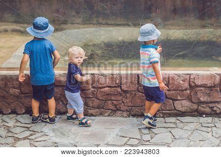 Boys watching reptiles in terrarium through glass. poster