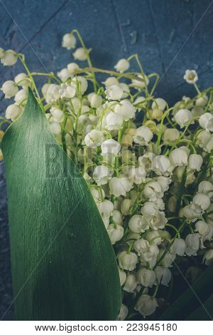 Lilly of the valley flowers and leaves close up on gray stone background, retro toned