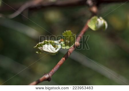 Rod branch with small growing leaves close up