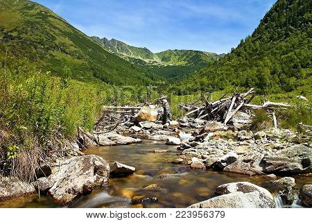 Stones, water, trees and forest in Slovakia. Stones in mountain river in the middle of Ziarska valley in Slovakia. Beautiful Slovakia.