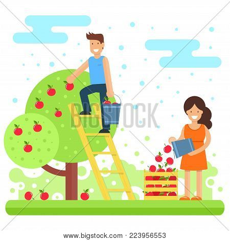 A happy family collects apple crops. Mother and son are collecting apples in the garden. Vector illustration. Joint work makes the family a solid and cohesive one.
