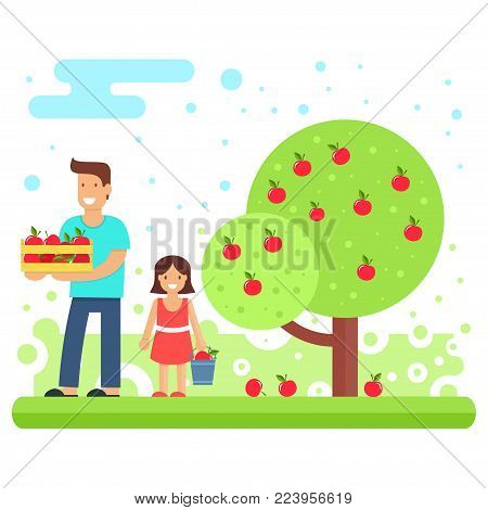 A happy family collects apple crops. Father and the youngest daughter are collecting apples in the garden. Vector illustration. Joint work makes the family a solid and cohesive one.