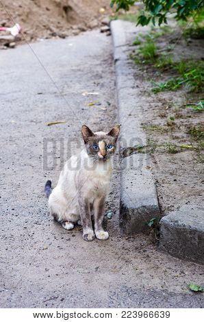 Portrait Of A Street Cat. Spotted Cat With Colored Eyes.