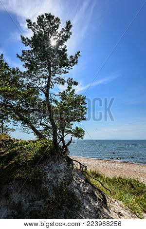 Beautiful Summer View Of The Baltic Sea,  Sandy Beach,  Pine Forest And Bright Blue Sky, Curonian Sp