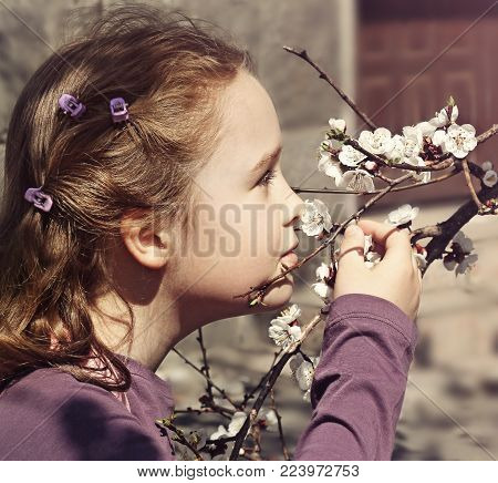 Little girl is breathing in the scent of flowers of apple-tree in springtime.
