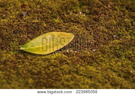 Creative Tropical Green Leaves Layout.green Leaves On Moss.green Leaf Pattern On The Moss Surface. N