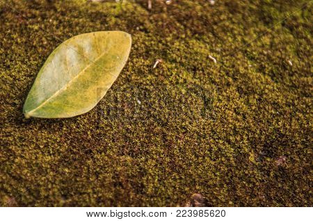Close-up image of green leaves placed on moss.Creative tropical green leaves layout.Green leaves on moss.Green leaf pattern on the moss surface. Nature spring concept.