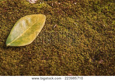 Green Leaves On Moss.green Leaf Pattern On The Moss Surface. Nature Spring Concept.creative Tropical