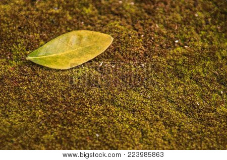 Close-up Image Of Green Leaves Placed On Moss.creative Tropical Green Leaves Layout.green Leaves On