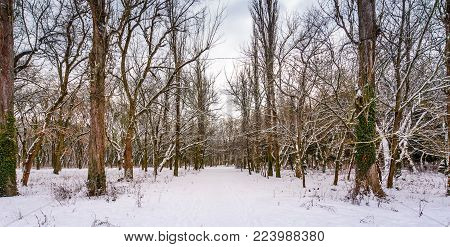 snow covered path among the leafless trees. lovely nature scenery in winter park