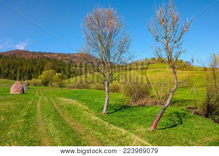 country road in to forest along the rural field. haystack and two leafless trees along the path. beautiful springtime in mountains