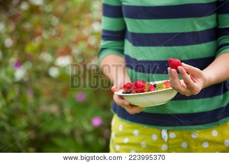 Closeup of woman's hands holding bowl with freshly picked organic raspberries, strawberries and black current berries on a sunny summer day. Girl eating berries. Healthy eating.
