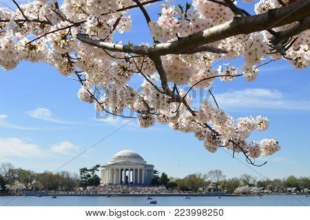 Jefferson Memorial during Cherry Blossom Festival - Washington DC, United States