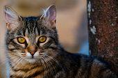 cat portrait feline perfect profile lovely pet poster