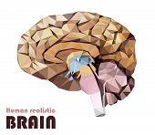 Realistic human brain in low poly. Colourful dissected brain. Brain Bisection. Cerebrum, epithalamus brainstem, cerebellum, cortex, thalamus, hippocampus, hypothalamus, cerebral lobes. Vector poster