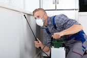 Pest Control Worker Spraying Pesticide On Wall With Sprayer In Kitchen poster