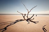 Botany Bay beach, Edisto Island, South Carolina, USA poster