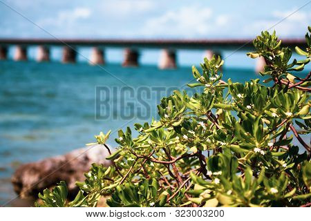 Piling Support Of Abandoned And Damaged Old Seven Mile Bridge Railroad With Landscape View In Florid