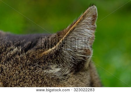 Close-up Cat Ear With The Texture Of Wool And Hairs On Green Heterogeneous Background