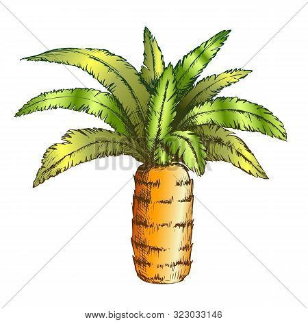 Pineapple Palm Tropical Tree Color Vector. Canary Island Jungle Flowering Palm Trunk Leaf Plant. Nat