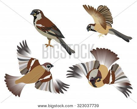 Set, Little Birds Sparrows, 4 Pieces. Isolated Over White Background. In Minimalist Style. Cartoon F