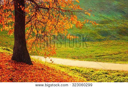 Autumn sunny landscape. Autumn trees and fallen autumn leaves on the ground along the autumn park alley in cloudy October day. Autumn background, colorful autumn view. Autumn nature scene