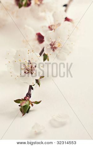 Spring Blossom Flowers.