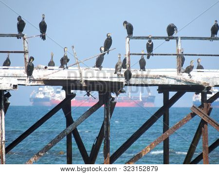 Cormorants Sitting On The Old Rusty Iron Pier. Birdwatching Concept. Beach Walking. Sea And Ship On