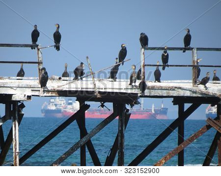 Black Cormorants Sitting On The Old Rusty Iron Pier On Sea Background. Nature And Birdwatching Conce