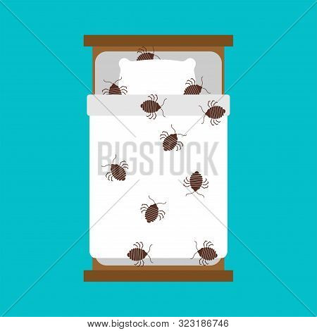 Bedbug in bed. chinch insect vector illustration