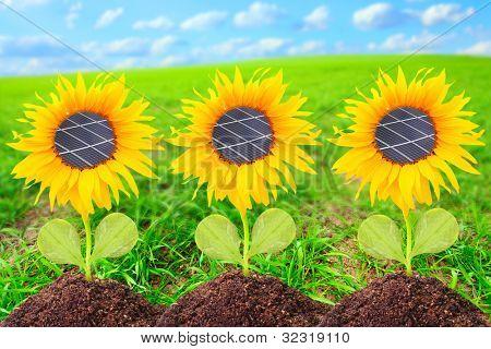 Solar panels on the sunflowers. Environmental concept. Pure energy metaphor.