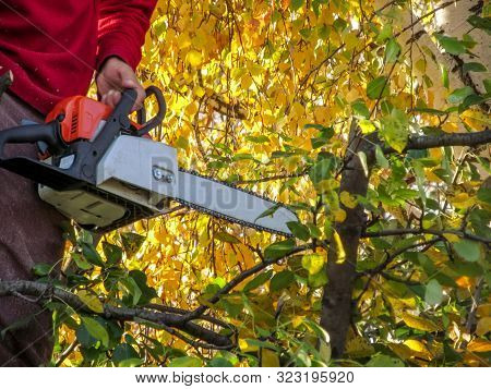 A Man Holds A Chainsaw In His Hand Against A Background Of Yellow Foliage Of A Birch Tree. Beautiful