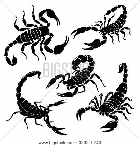 Scorpion Set. A Collection Of Black And White Stylized Scorpions. Vector Illustration Of Poisonous I