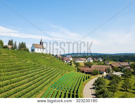 Commune Rheinau With Vineyard And Bergkirche St. Nikolaus On The Hill Top, Canton Zurich, Switzerlan
