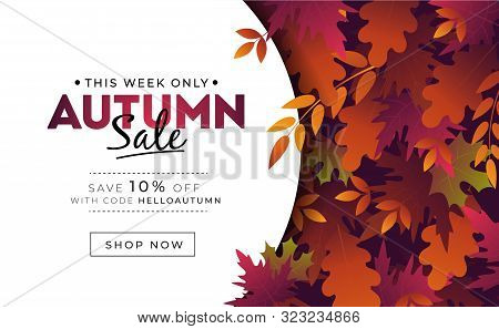 Sale Banner With Foliage For Autumn Promotions Vector Illustration. Profitable Proposition Save 10 P