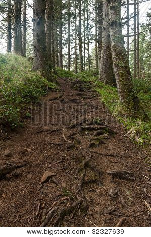 Forest Trail With Erosion, Oregon