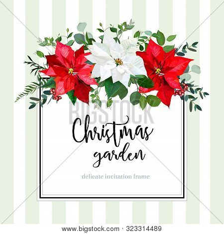 Square Floral Vector Design Card In Christmas Style. White And Red Poinsettia Flowers, Eucalyptus, G