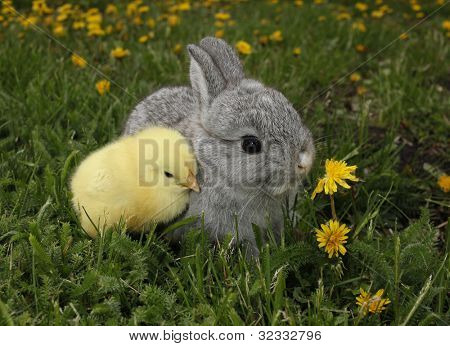 Gray rabbit bunny baby and yellow chick best friends poster