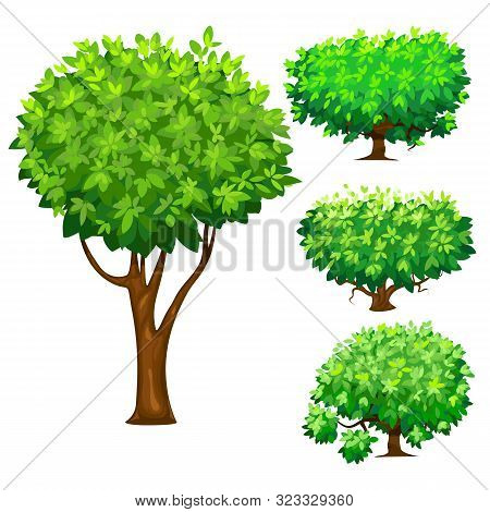 Tree And Bushes. Flat Illustrations With Wood And Shrubs. Forest Trees. Vector Illustration,