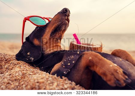 Cute Dog Of Dachshund, Black And Tan, Buried In The Sand At The Beach Sea On Summer Vacation Holiday