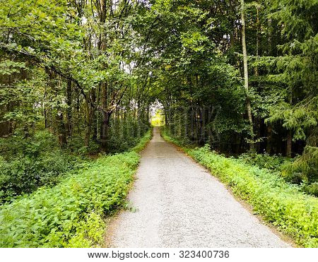 Long Path In A Forest Going Beyond The Horizon. Straight Road In The Wood Surrounded By Green Trees.