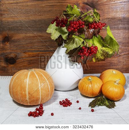 Still Life With Ripe Pumpkin And Red Berries Of Viburnum In A White Vase