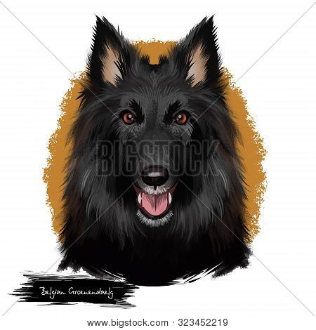 Groenendael Shepherd, Belgian Sheepdog, Belgian Groenendael Dog Digital Art Illustration Isolated On