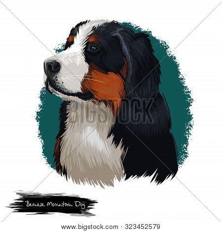 Bernese Mountain Dog, Berner Sennenhund Dog Digital Art Illustration Isolated On White Background. S