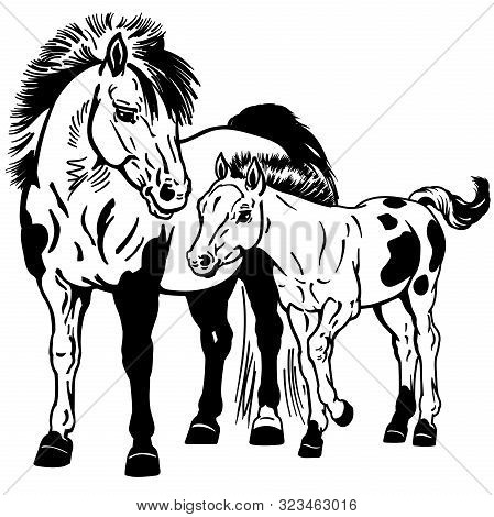 Shetland Pony Horses. Miniature Spotted Mare With Little Foal. Black And White Isolated Vector Illus