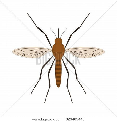 Cartoon Color Mosquito Insect Symbol Of Malaria, Epidemic And Pest. Vector Illustration Of Bloodsuck